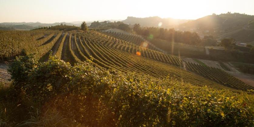 Vinprovning Toscana